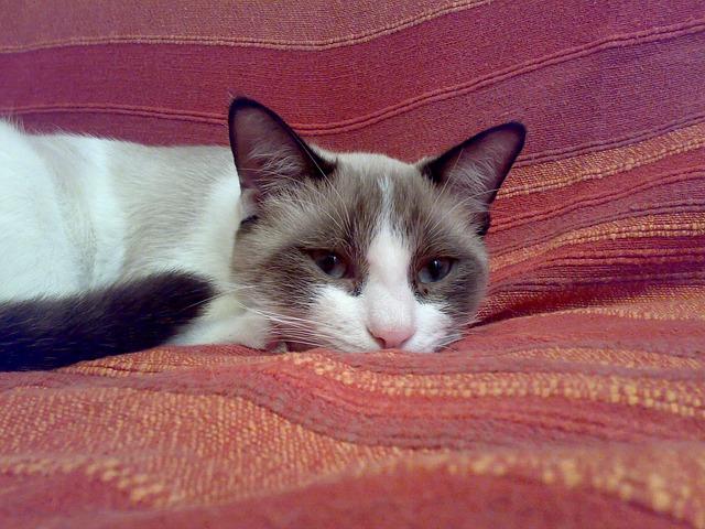 kočka v měkkém pelíšku